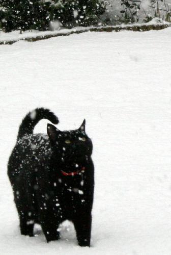 Snow Kermie opti